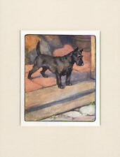 SCOTTISH TERRIER LOVELY 1905 ANTIQUE DOG PRINT by VERNON STOKES READY MOUNTED