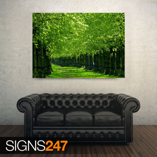 NATURE POSTER AE060 UNDER THE TREES Photo Picture Poster Print Art A0 to A4