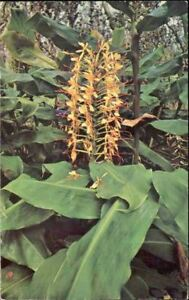 od7-Flower-Postcard-Kahili-Ginger