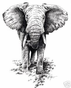 african elephant pen and ink art print signed by artist dj rogers w