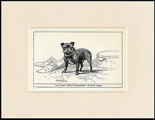 TOY BULLDOG RARE ANTIQUE 1900 WOOD BLOCK ENGRAVING DOG PRINT READY MOUNTED