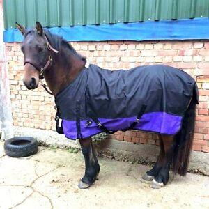 New Miniature Shetland Pony Foal Show