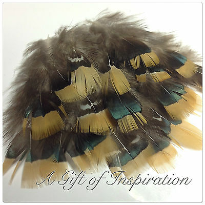 20 Amherst Natural Orange Yellow Pheasant Feathers DIY Craft Millinery Jewellery