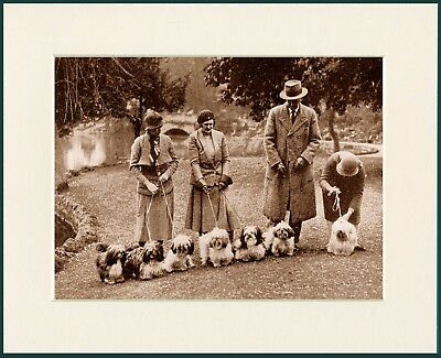 ENGLISH TOY TERRIER DOGS AND LADY OWNER DOG PHOTO PRINT MOUNTED READY TO FRAME