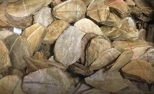 120 Stück 10-15cm - Seemandelbaumblätter / Catappa Leaves / Wasseraufbereitung