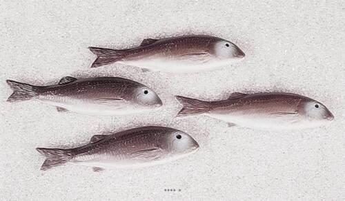 Artificial mullet fish lot of 4 plastic blown l 215x55 mm