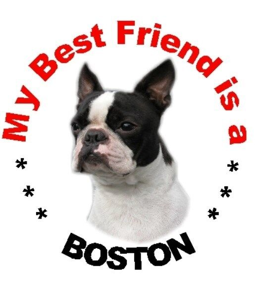 BOSTON TERRIER OFFICIAL TAXI SERVICE  Dog Car Sticker  By Starprint