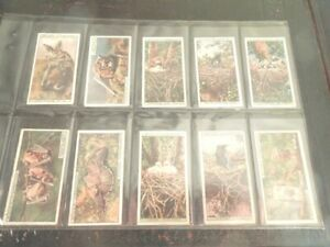 1925-Tobacco-Card-complete-Set-50-cards-Wills-LIFE-IN-THE-TREE-TOPS-Birds-Bats