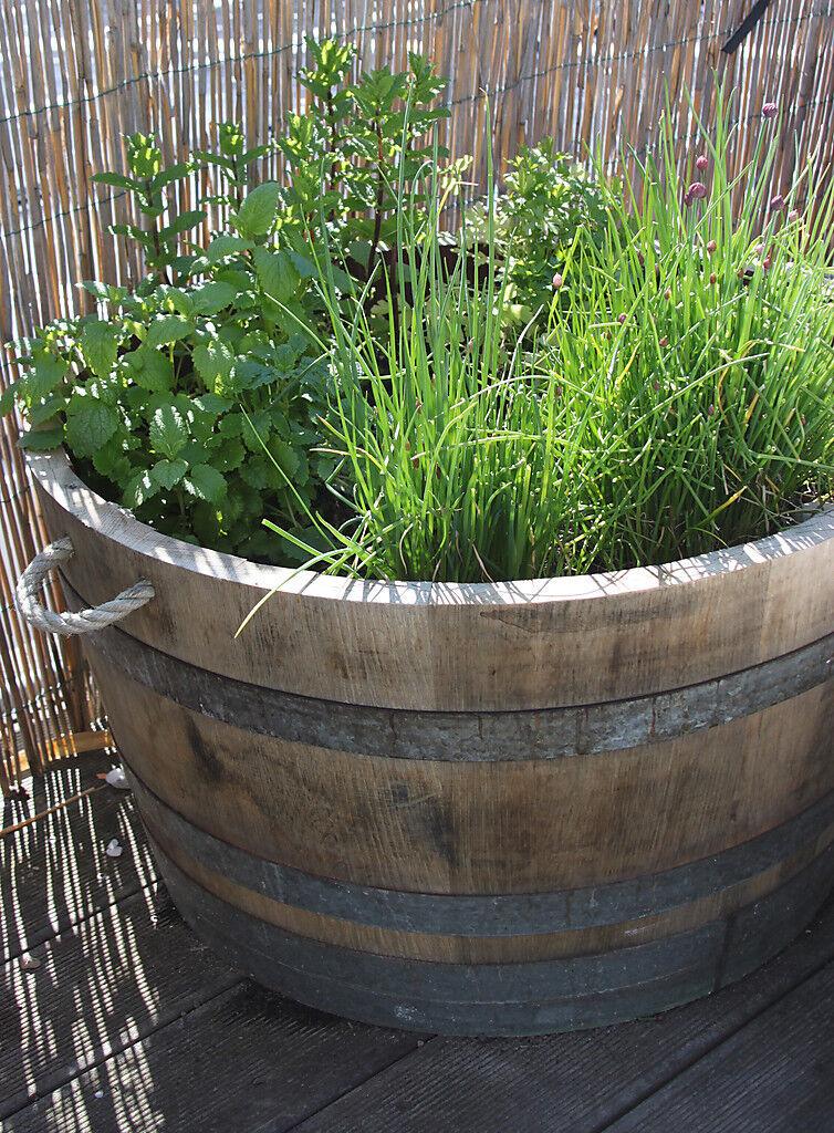 Maceta, barril macetero en madera madera madera roble maciza, estanque, depósito agua lluvia 4b6bbf