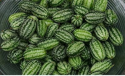 Vegetable - Cucamelon - 10 Seeds - Economy