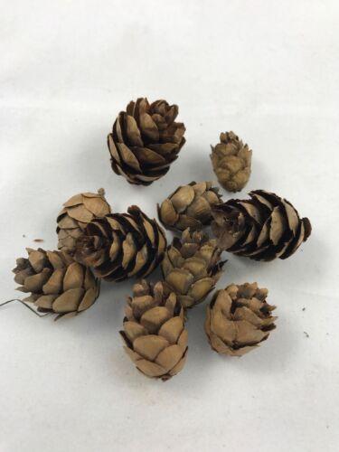 Paquete De 10 pequeños conos de pino