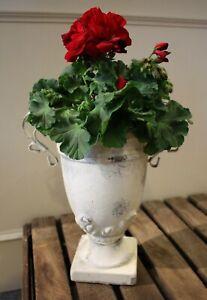 Détails sur Décoration de Jardin Shabby Cache-Pot Pot Fleur Coupe Vase Ton  Métal 29cm Haut
