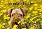 Airedale Terrier (Posterbuch DIN A4 quer) von Susan Milau (2013, Ringbuch)