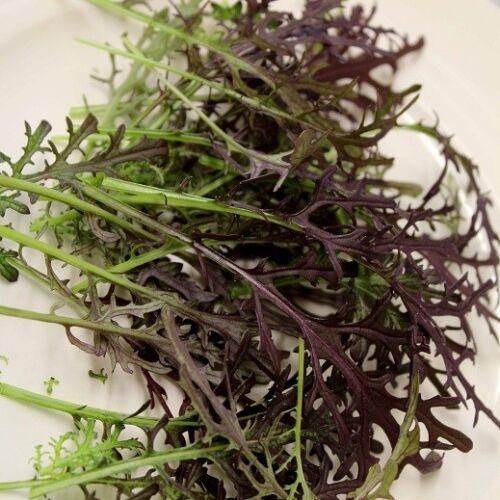 4000 seeds 350 PREMIER QUALITY lettuce leaf salad all year round