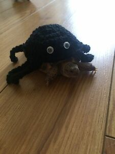 Handmade Crochet Tortoise Turtle Spider Cosy Outfit Sweater Photo Props Ebay