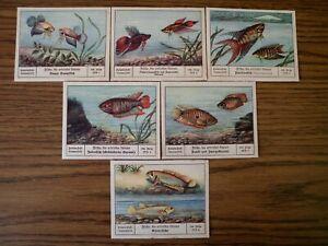 PALMIN BILDERREIHEN Folge196 Fische die ertrinken können Komplett