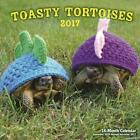 Tortoise in a Sweater 16 Month Cal 2017 Editors of Rock Point 9781631062247