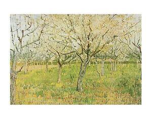 Vincent-van-Gogh-Der-Obstgarten-Poster-Kunstdruck-Bild-40x50cm