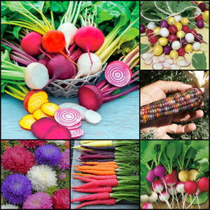 SEEDS Rainbow Carrot Beetroot Chrysanthemum Corn Radish Colourful Plant Vegetabl - bury, United Kingdom - SEEDS Rainbow Carrot Beetroot Chrysanthemum Corn Radish Colourful Plant Vegetabl - bury, United Kingdom
