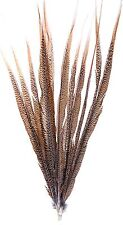 """Golden Pheasant Tail Feathers Natural Barred 12 Pcs 30""""-33"""" Long Crafts Hat 147z"""