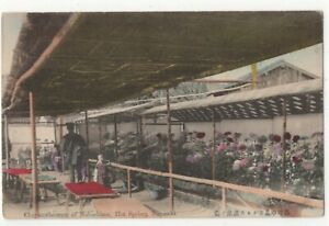 Chrysanthemum-Of-Nakashima-Hot-Spring-Nagasaki-Japan-Vintage-Postcard-174c