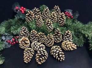 12-LARGE-PINE-CONES-CHRISTMAS-CRAFTS-TREES-GARLANDS-WREATHS-DECOR-7-9cm
