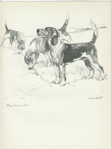 FOXHOUND LOVELY OLD 1938 DOG ART PRINT by VERNON STOKES