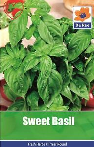 Herb-Sweet-Basil-Seeds
