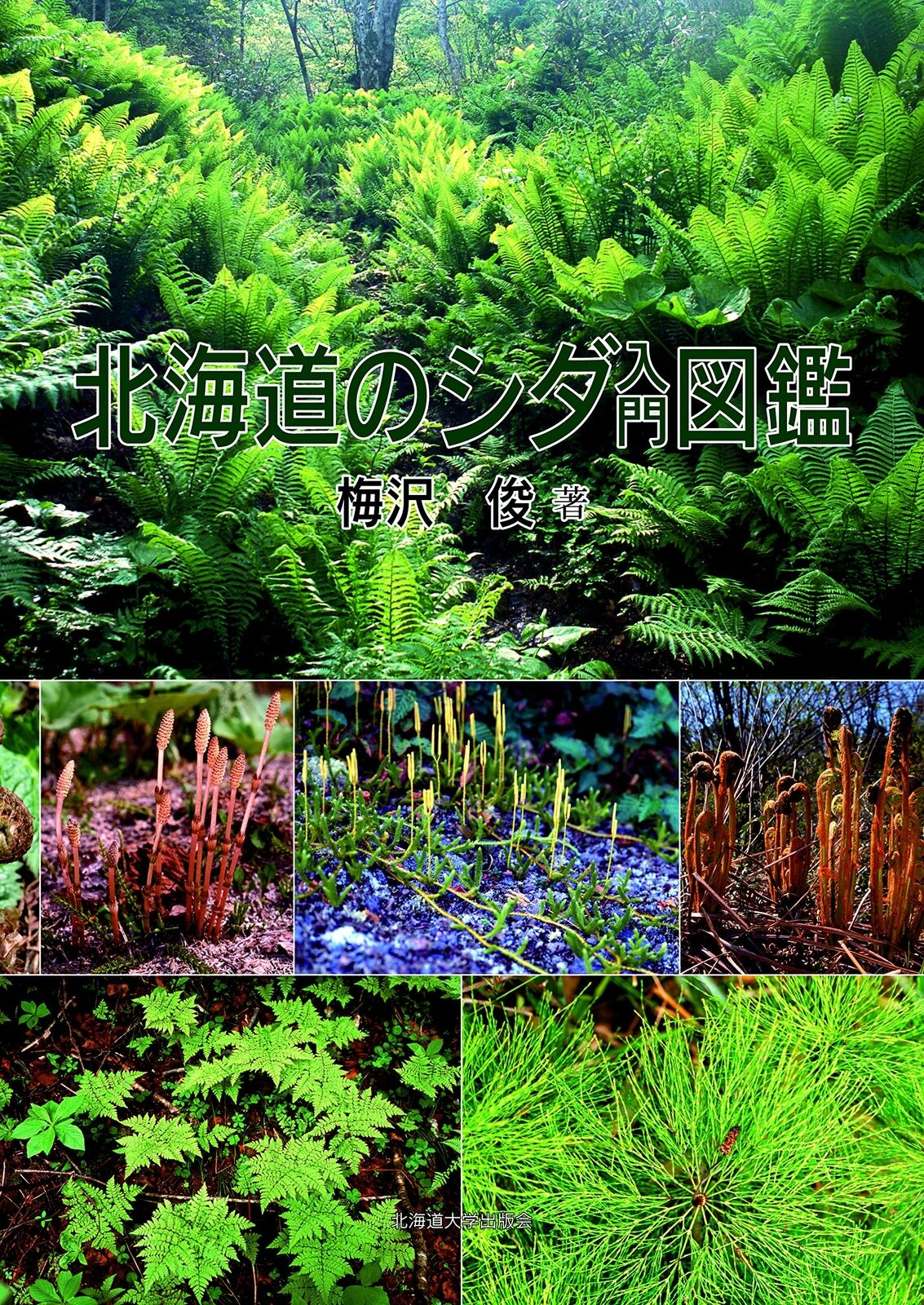 barato y de alta calidad Libro de imágenes helechos helechos helechos en Hokkaido  encuentra tu favorito aquí
