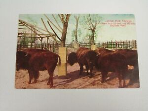 J1146-Postcard-Lincoln-Park-Chicago-IL-Illinois-Buffalo-Herd-Zoo
