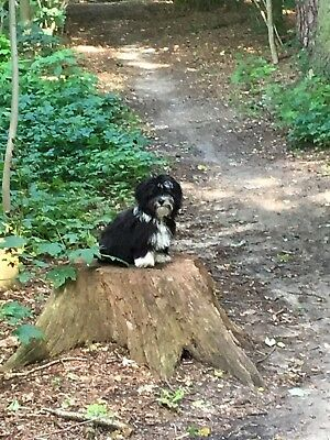 privat hundepasning fyn
