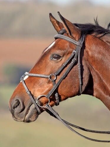 Shires Phoenix Figure8 Jumping Bridle FancyStitched with Rubber Grip Reins
