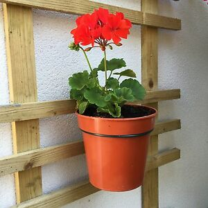 Plant pot holders to hang 6 plant pots on trellis - Flower pots to hang on fence ...