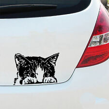 kitten car decal sticker vw van bmw vinyl art cat lover crazy lady funny pet