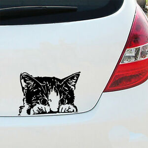 Gatito-Coche-Decal-Sticker-VW-Van-BMW-Vinilo-Arte-Mascota-Gato-Amante-Crazy-Lady-Divertido