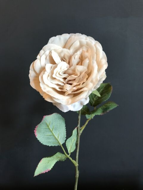 Individual Cream Artificial Cabbage Rose, Realistic Off White Faux Silk Flowers