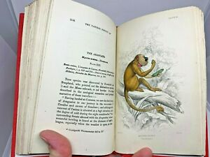 Jardine-29-Hand-Colored-Plates-Engraved-1888-Monkeys