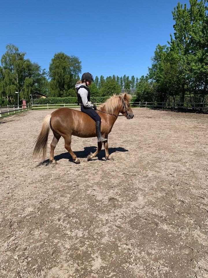 Blanding, hoppe, 6 år