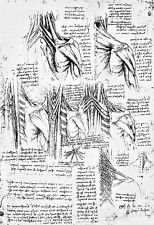 Leonardo Da Vinci Muscles of the Neck and Shoulder Anatomy Poster Print Art