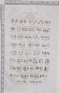 1788-ANTIQUE-PRINT-BOTANY-TOURNESORTS-SYSTEM-GENERA-PLANTS-FLOSCULOUS