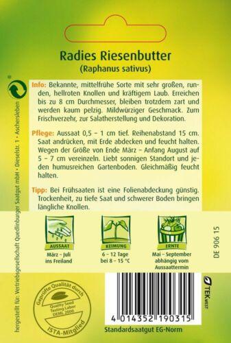 RADIES GIGANTE burro RADICCHIO SEMI verdura orti semi grandi tuberi 5 lfdm sementi