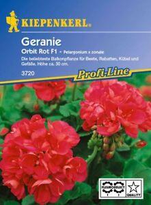Kiepenkerl-Geranium-3720-Orbit-Rouge-F1-Balkonpflanze-pour-Betterave-Seau-Et