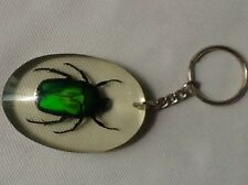 RARE FLOWER BEETLE BUG TAXIDERMY KEY CHAIN KEYRING INSECT TORRYNORRHINA FLAMMEA
