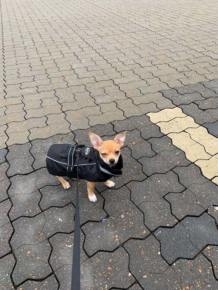 Hundebeklædning, Vinterjakke til lille hund