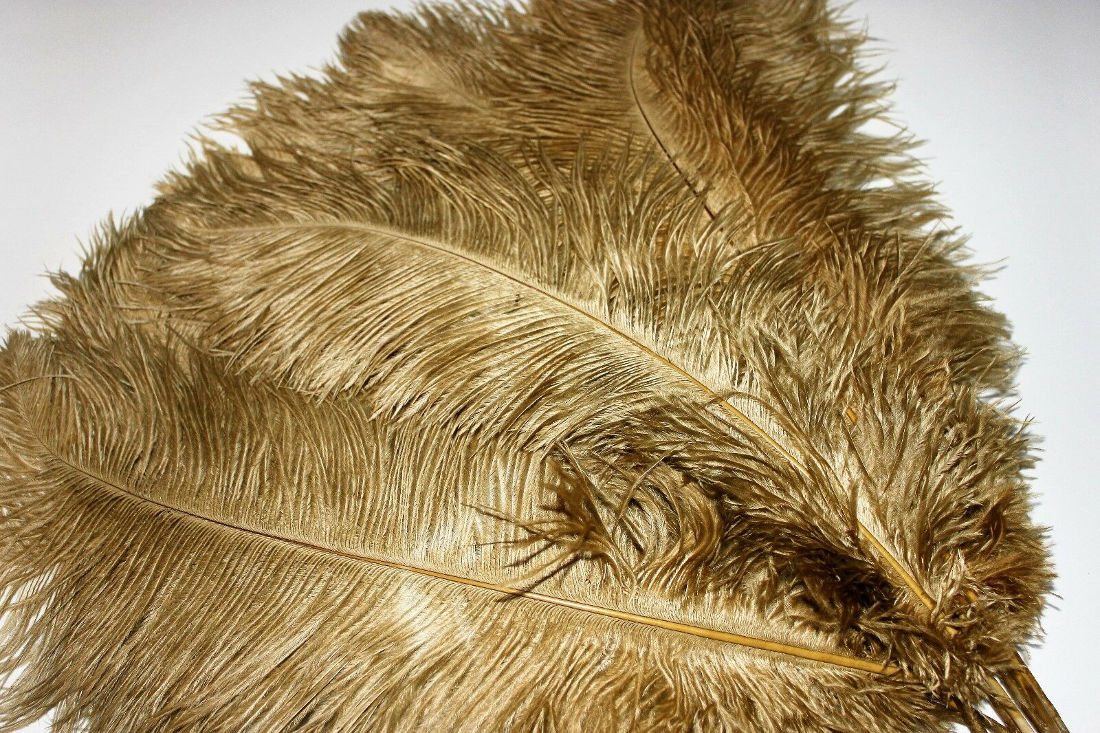 Fifty ( 50 ) old or drabs ostrich feather first grade 375-420MM (15-17)