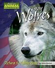 Gray Wolves: Return to Yellowstone by Meish Goldish (Hardback, 2007)