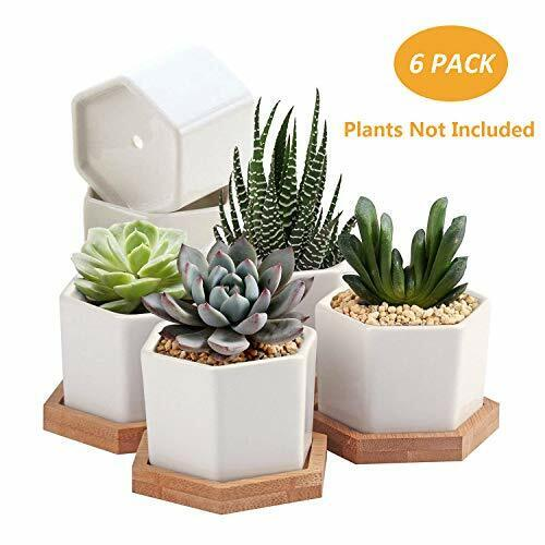 Set Of 6 White Ceramic Succulent Cactus Planter Pots With Bamboo Tray 2 75 Inch For Sale Online Ebay