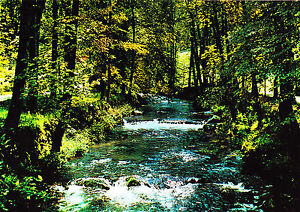 Original Wildbad Im Schwarzwald Enzanlagen ungelaufene Ak GläNzend