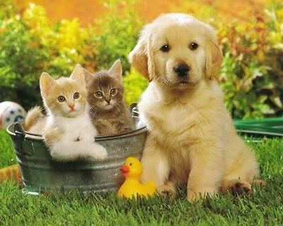 Cats And Puppy Art Poster Print New