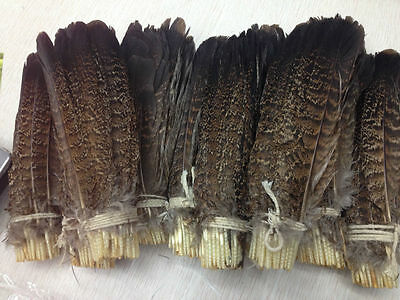Wholesale 10-100 PCS precious USA wild turkey tail feathers 6-8 inches/ 15-20 cm